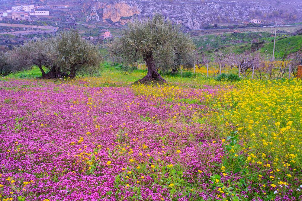 111 Sicilian countryside in the spring season,