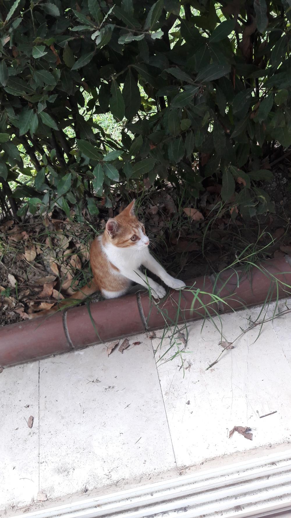 Here's a cute kitty