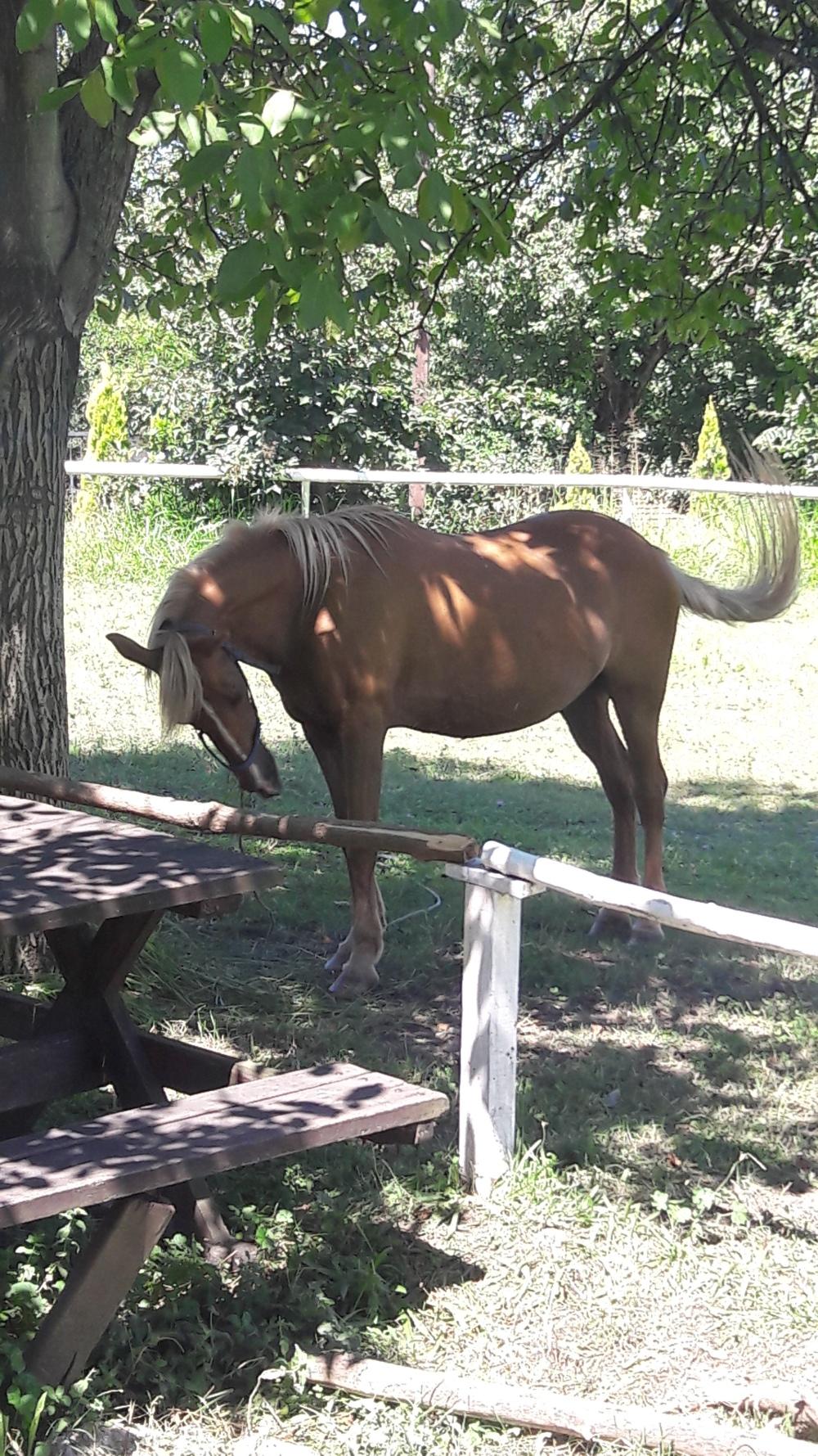 Horse Sakarya