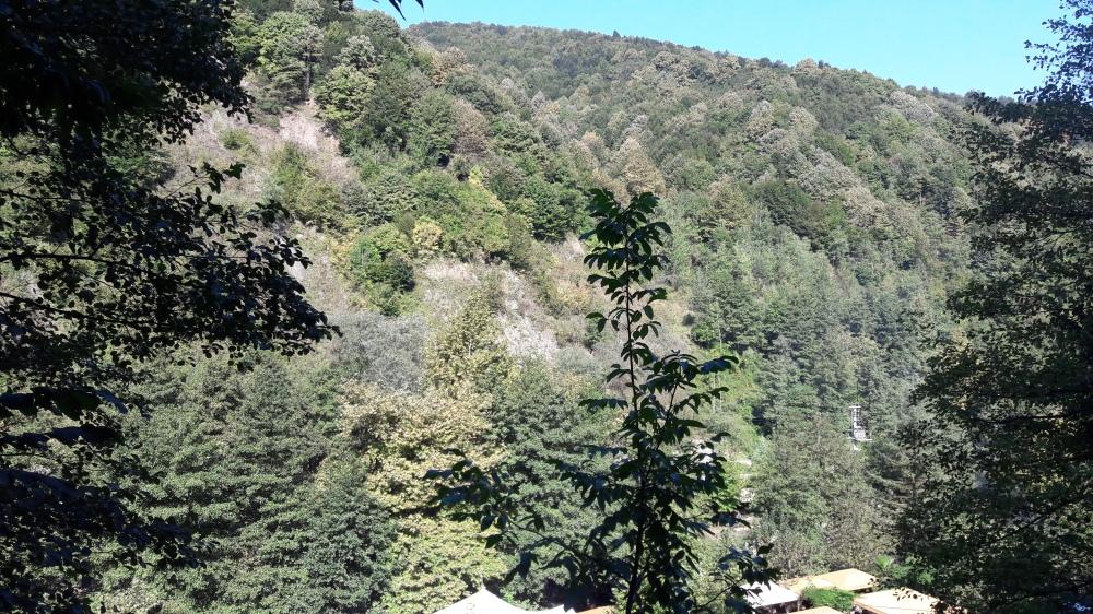 Sakarya Forest